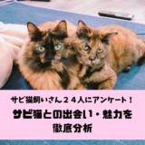 サビ猫飼いさん24人に聞いた!サビ猫との出会い・サビ猫の魅力について徹底分析