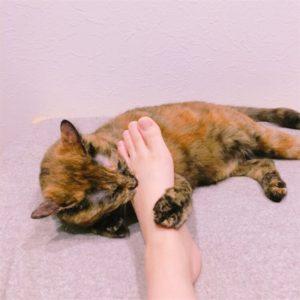 飼い主の足を噛む猫