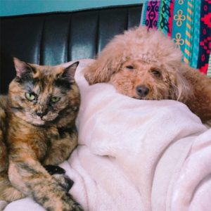まどろむ犬と猫
