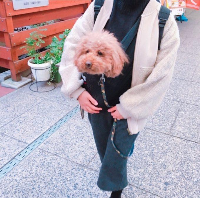 スリングで抱っこされている犬
