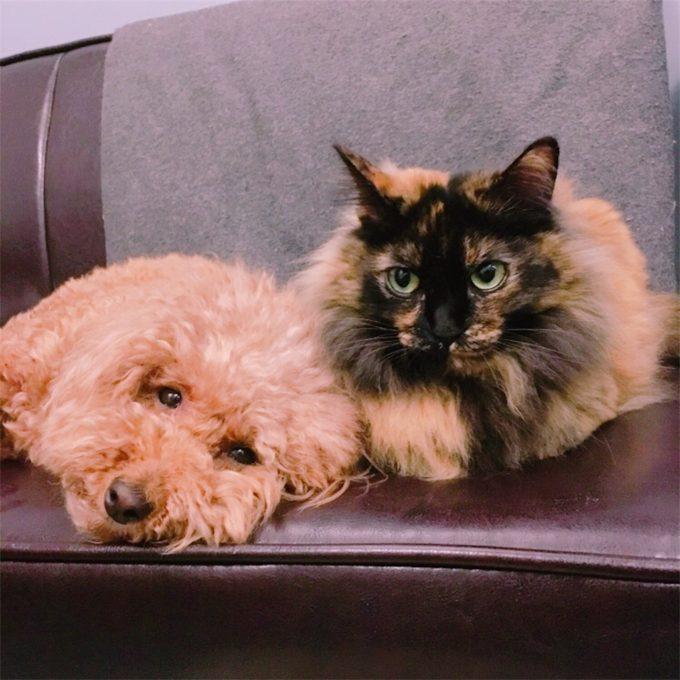 ソファでくっつく犬と猫