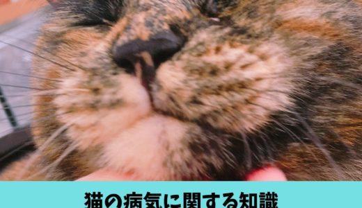 猫の鼻水は病気かも?猫の鼻水に関する豆知識(症状・原因・危険性・対処法)