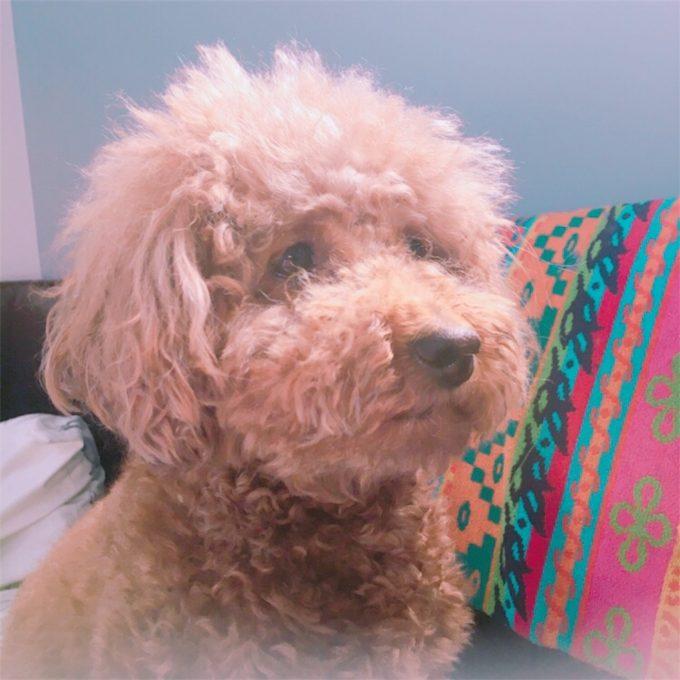 ニキビができて悲しそうな犬
