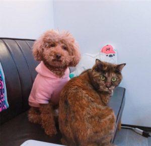並んで座る犬と猫