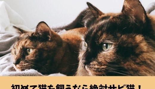 【初めて猫を飼うなら絶対サビ猫】オススメする5つのメリットとサビ猫との出会い方