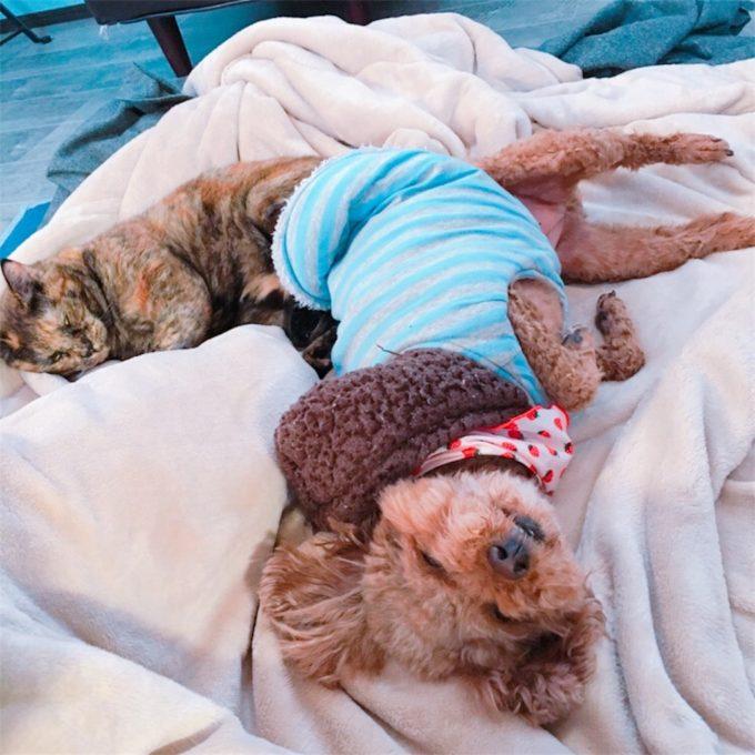 寝ている犬と猫