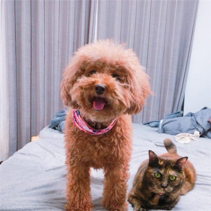 横に並ぶ犬と猫