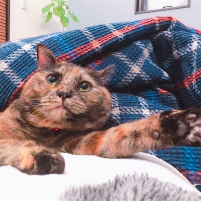 片手をあげている猫