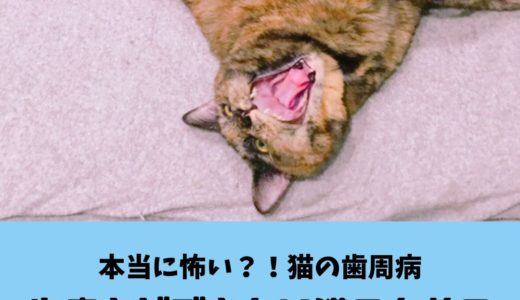 【愛猫の歯周病予防】歯磨きできない子のための効果的な口腔ケアとは?