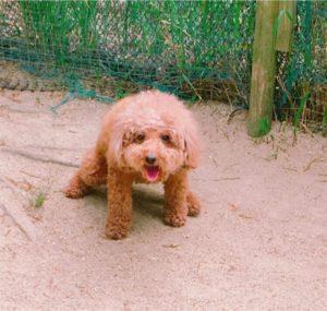 竜王公園ドッグランで遊ぶ犬
