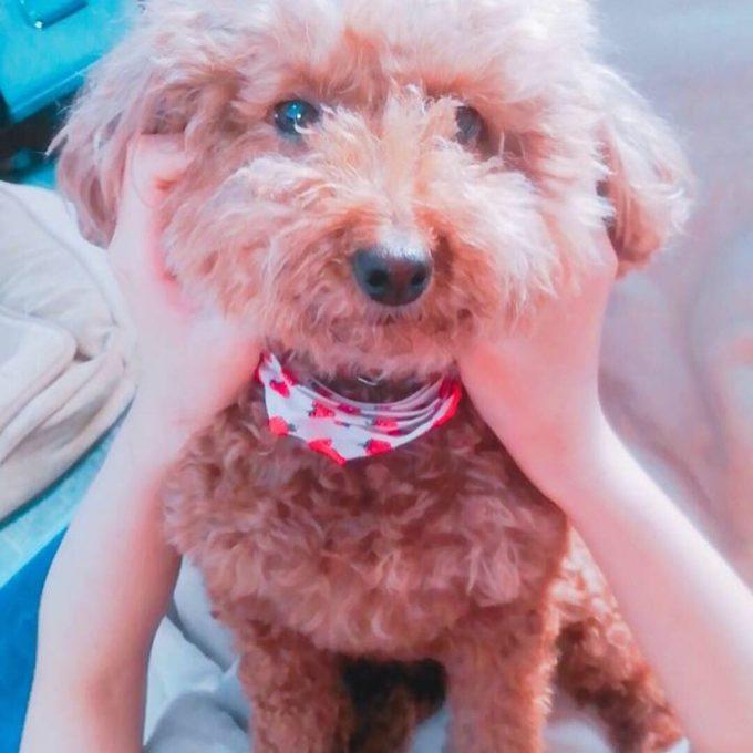 顔を触られている犬