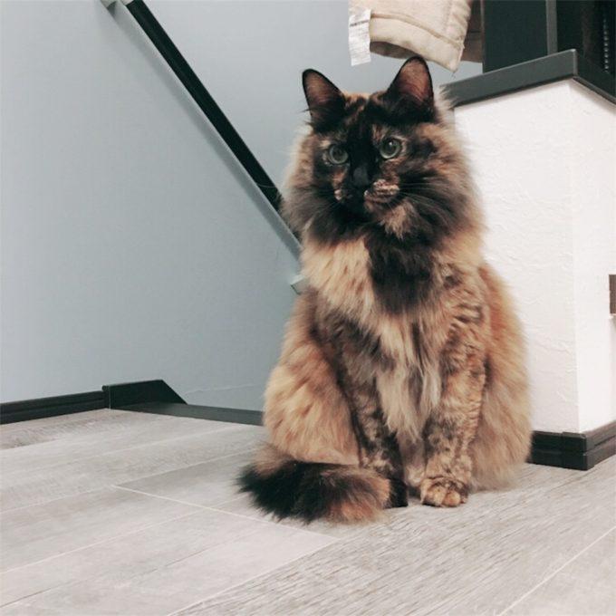 たたずむサビ猫