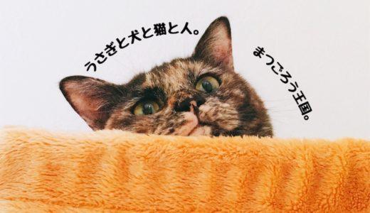 猫が寄ってくる動画を検証!再生すると本当に猫がやって来るのか⁈