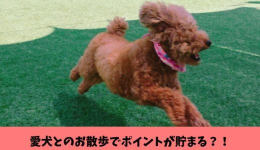 愛犬とのお散歩でポイントが貯まる?!ダメ飼い主のやる気アップに最適な無料万歩計アプリFiNCの魅力