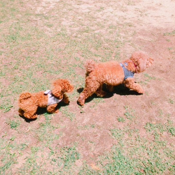 花みどり公園で遊ぶ2匹の犬