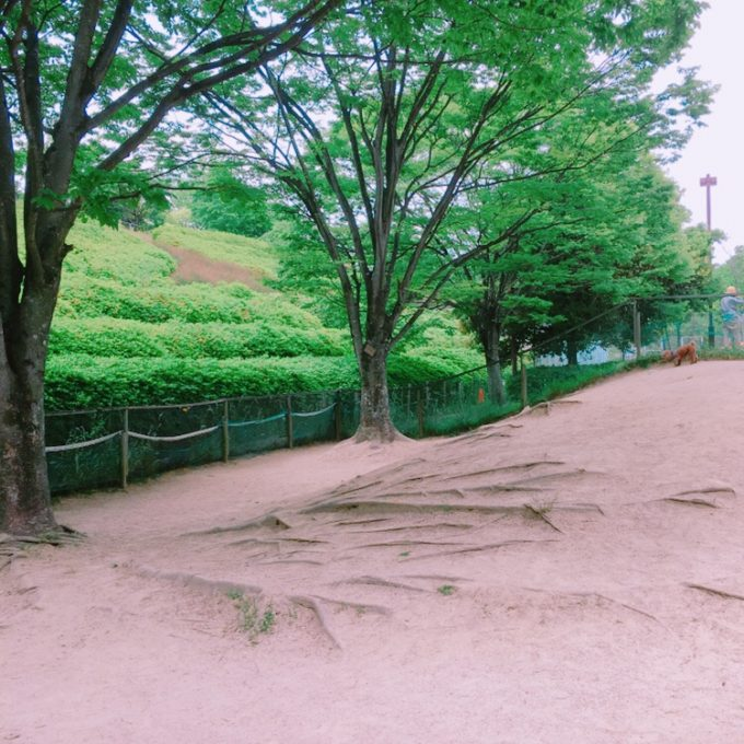 広島竜王公園ドッグラン