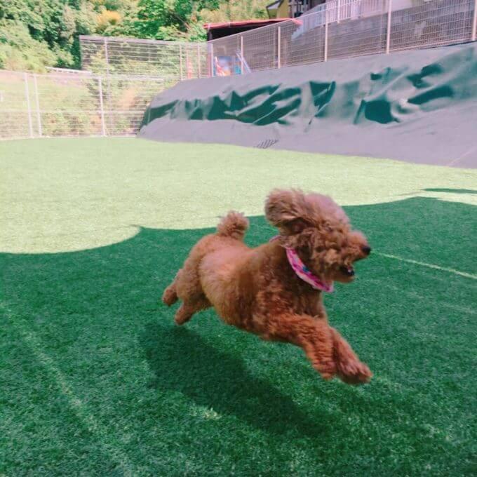 アオプラスワンのドッグランで遊ぶ犬3