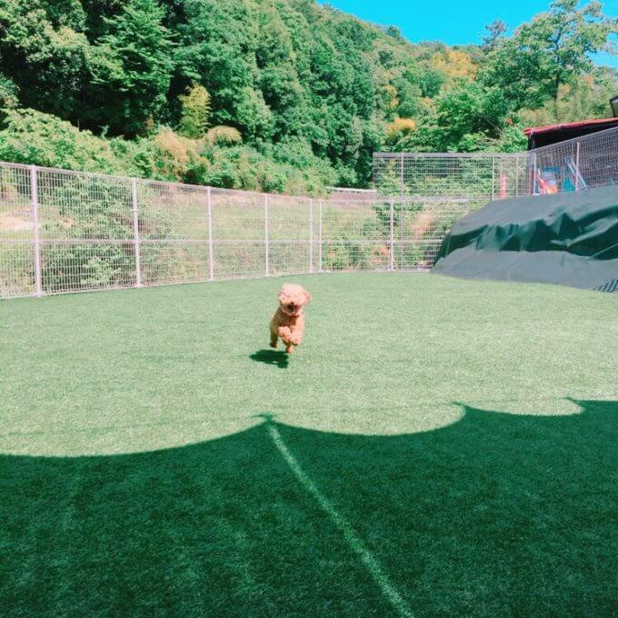 アオプラスワンのドッグランで遊ぶ犬