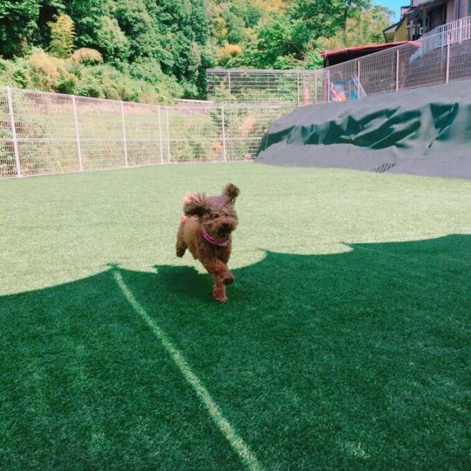 アオプラスワンのドッグランで遊ぶ犬2