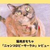 【ミュー(mju:)猫用おもちゃニャンコロビーサークルレビュー】猫が喜ぶ爪とぎ付きおもちゃの特徴・口コミ・使用感