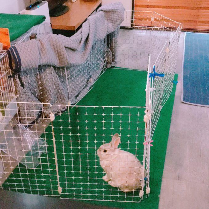 うさぎの飼育環境