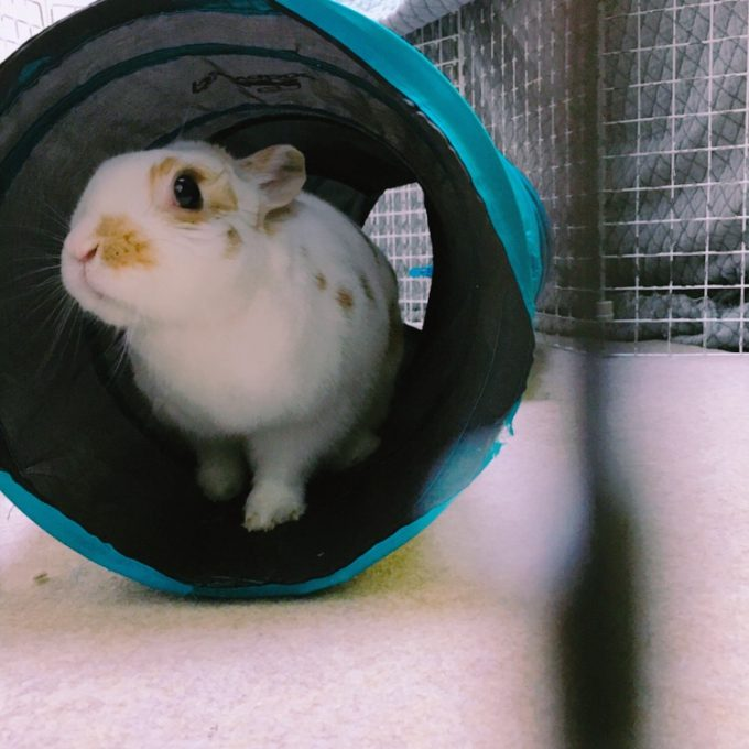 みつまたトンネルで遊ぶウサギ