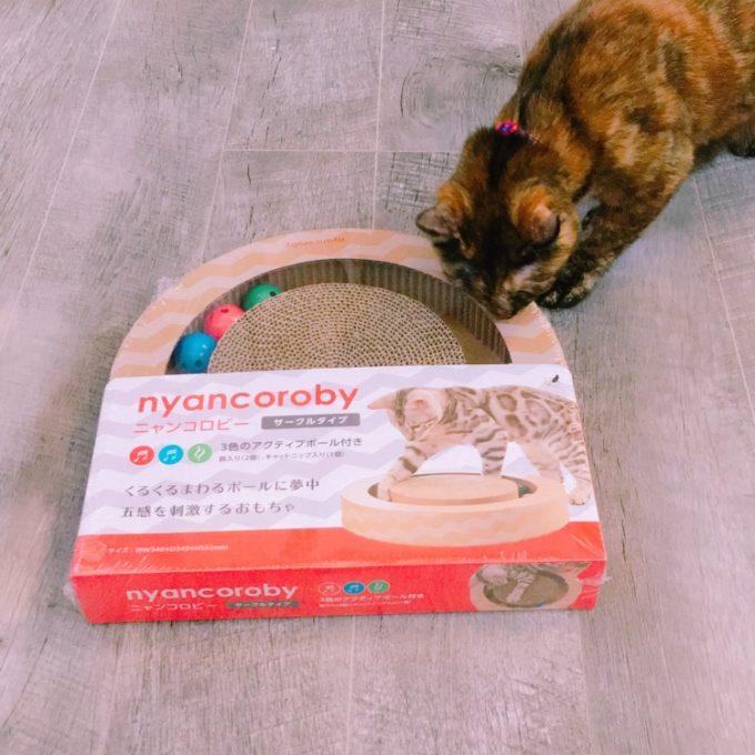 ニャンコロビーで遊ぶ猫