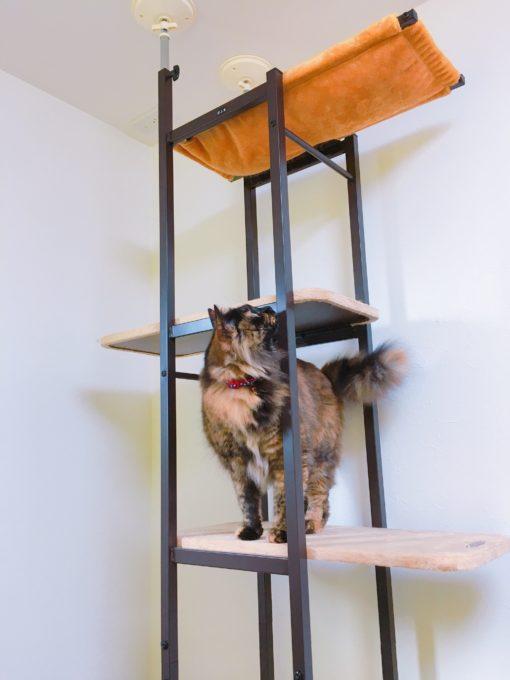 おしゃれな猫タワー「キャットベース」と猫