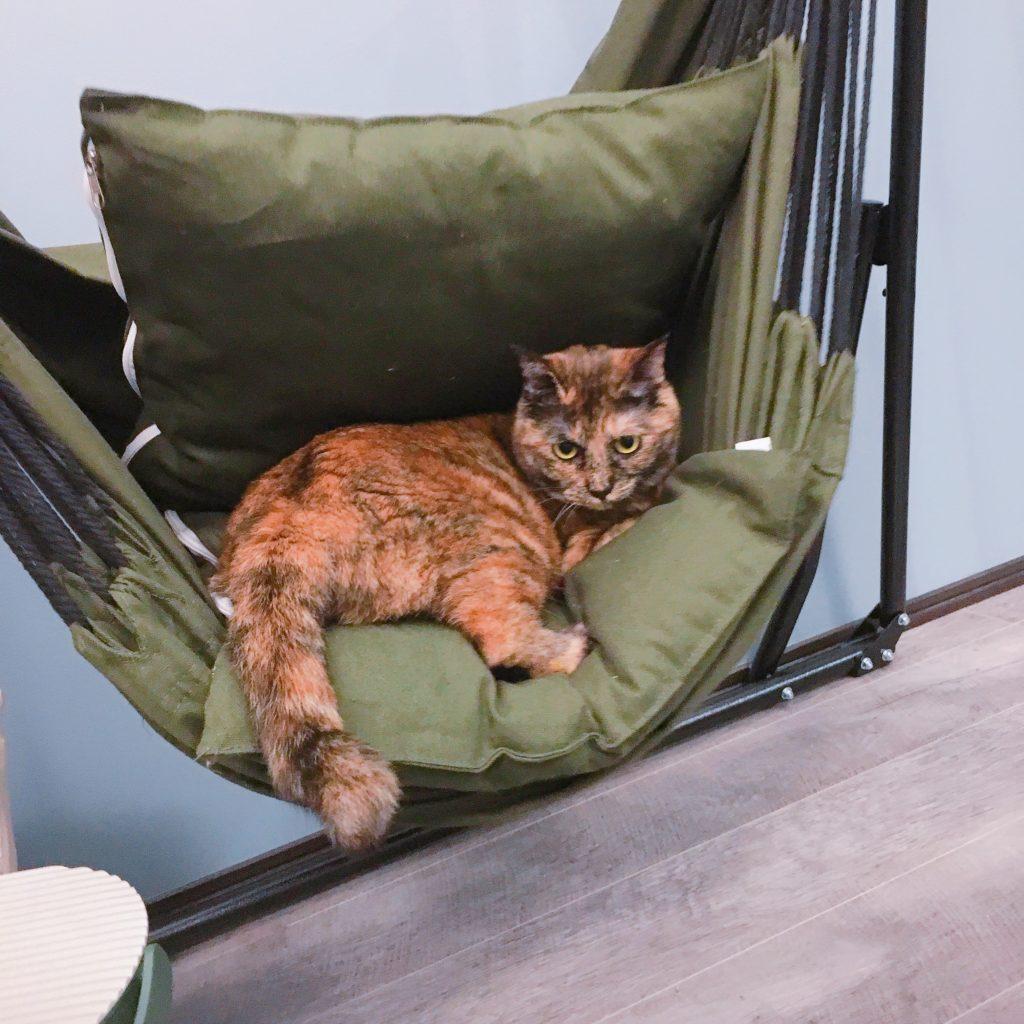 ハンモック「シフラス」と猫