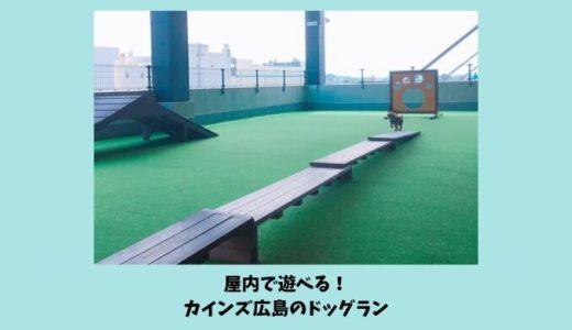 【カインズ広島LECT店のドッグラン】雨の日でも愛犬と遊べる屋内ドッグランの遊び方