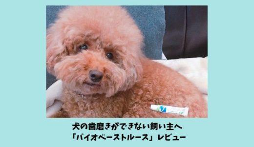 犬の歯磨きができない飼い主のための救世主「バイオペーストルース」レビュー