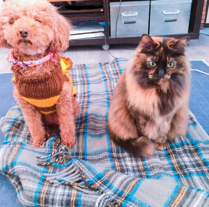 電気ひざ掛けで温まる犬と猫