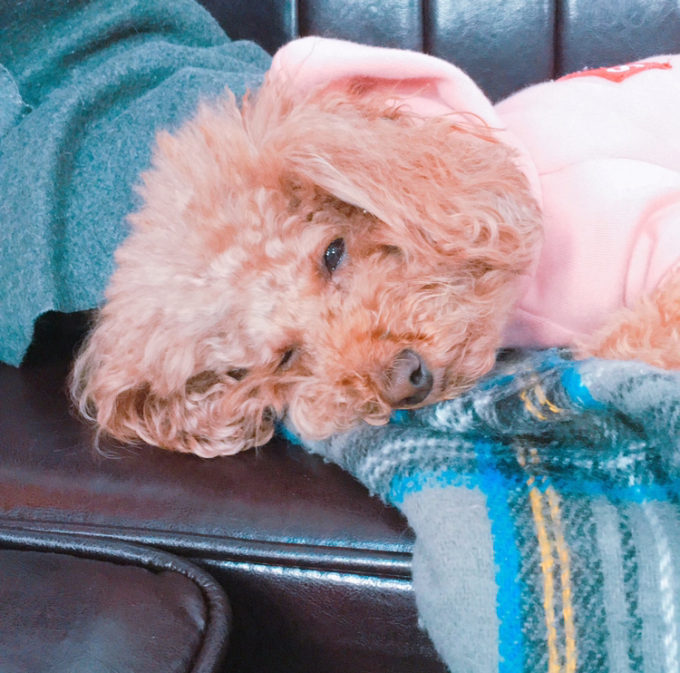 犬・猫の寒さ対策におすすめの【電気ひざ掛け毛布】