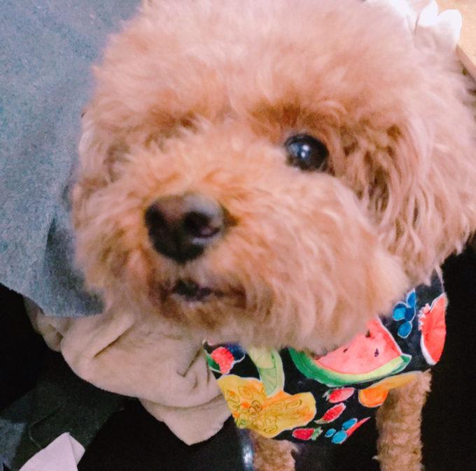 愛犬の健康管理ピュリナワンドッグフード