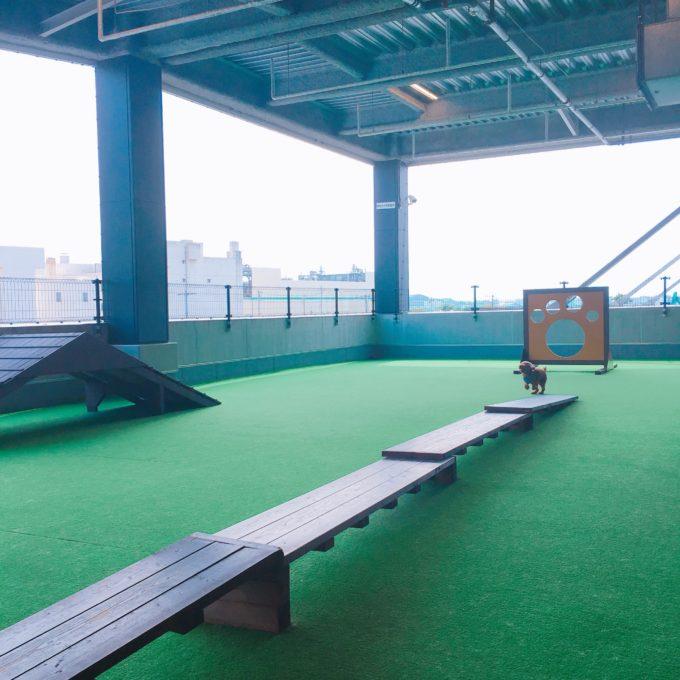 広島の屋内ドッグラン