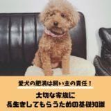 【愛犬の肥満は飼い主の責任】大切な家族に長生きしてもらうための基礎知識