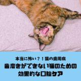 猫の歯磨きができない飼い主のための効果的な口腔ケアと歯周病の恐怖について