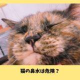 猫の透明な鼻水は危険?鼻水の状態からわかる危険度と対処法