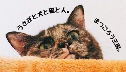 うさぎと犬と猫と人の情報サイト「まつごろう王国」