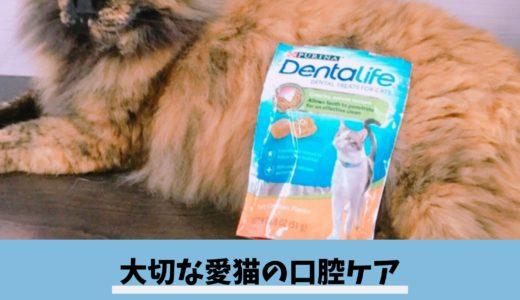 【レビュー|ピュリナワンデンタライフ】愛猫の口腔ケアにおすすめの歯磨きスナック