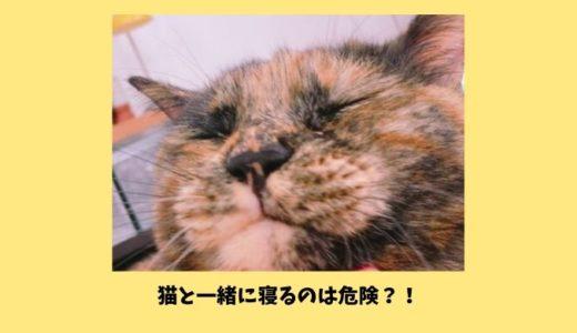 猫と一緒に寝るのはダメ!病気や怪我の危険性|ペットと添い寝してはいけない理由や寝る場所のしつけ方