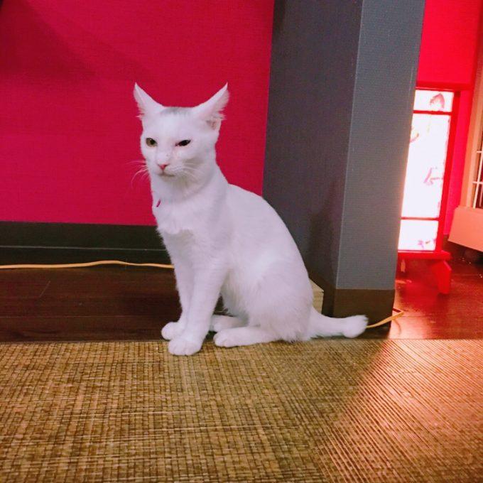 広島の保護猫カフェの子猫