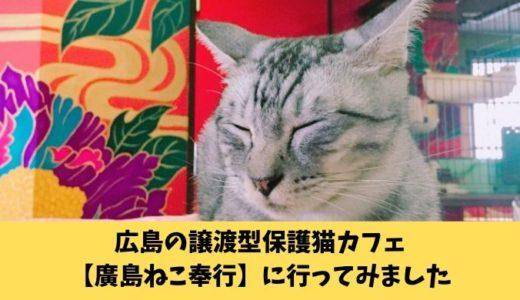 【廣島ねこ奉行(ひろしまねこぶぎょう)】保護猫カフェに行ってみた