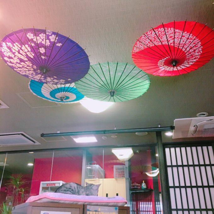 広島の保護猫カフェ