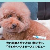 犬の歯磨きができない人の救世主「バイオペーストルース」レビュー