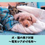 犬・猫の寒さ対策におすすめのグッズ|電気ひざ掛け毛布レビュー