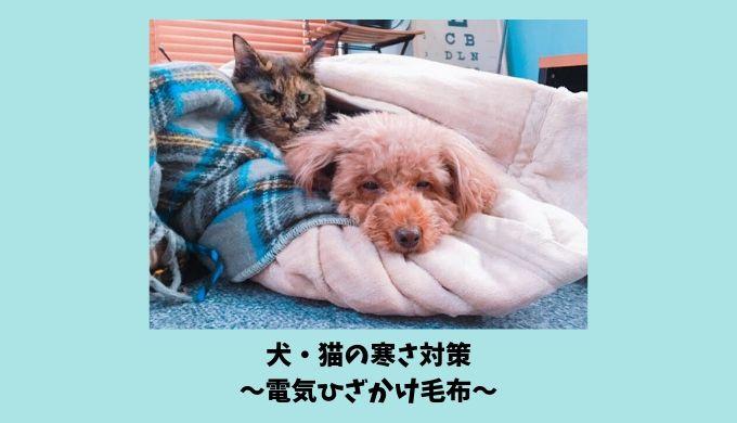 犬・猫の寒さ対策におすすめ【電気ひざかけ毛布】