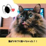 猫とゴキブリ
