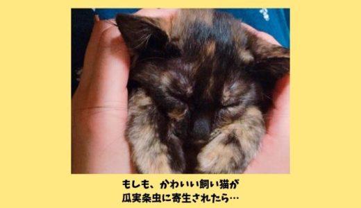 猫の瓜実条虫(うりざねじょうちゅう)原因や症状や駆虫は?猫のお尻からゴマが大量に出てきた話