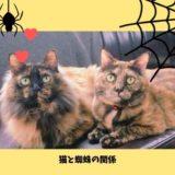 猫は蜘蛛もゴキブリも食べる?!安全性と猫に危険な蜘蛛の種類